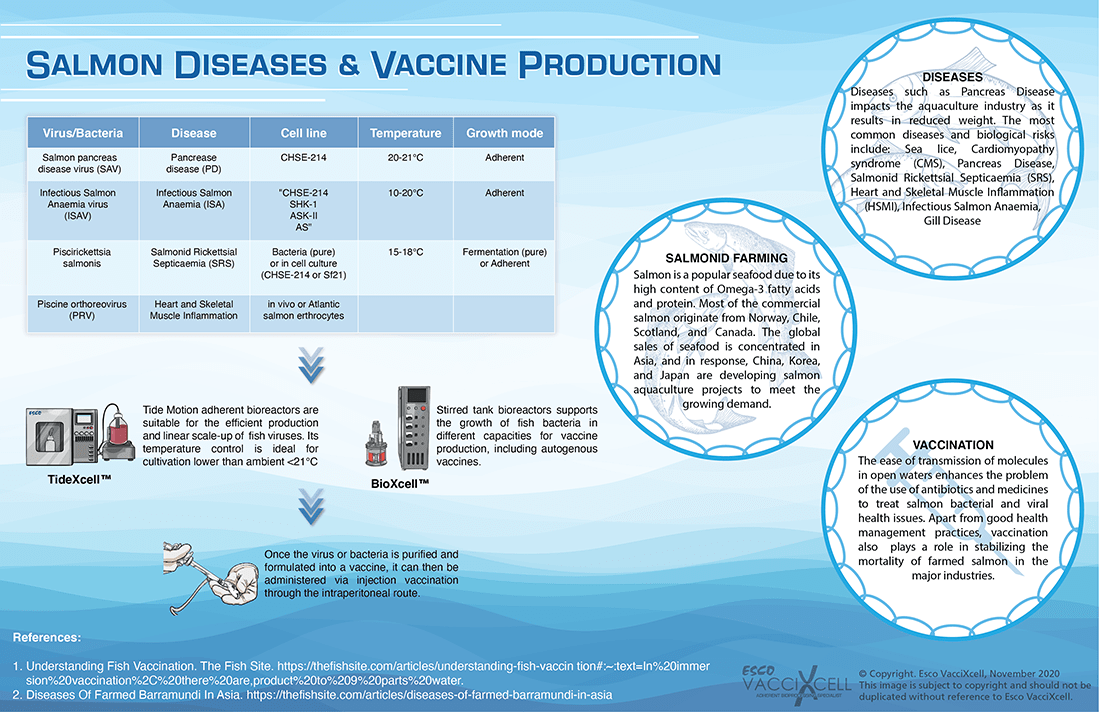 Barramundi Diseases and Vaccine Production