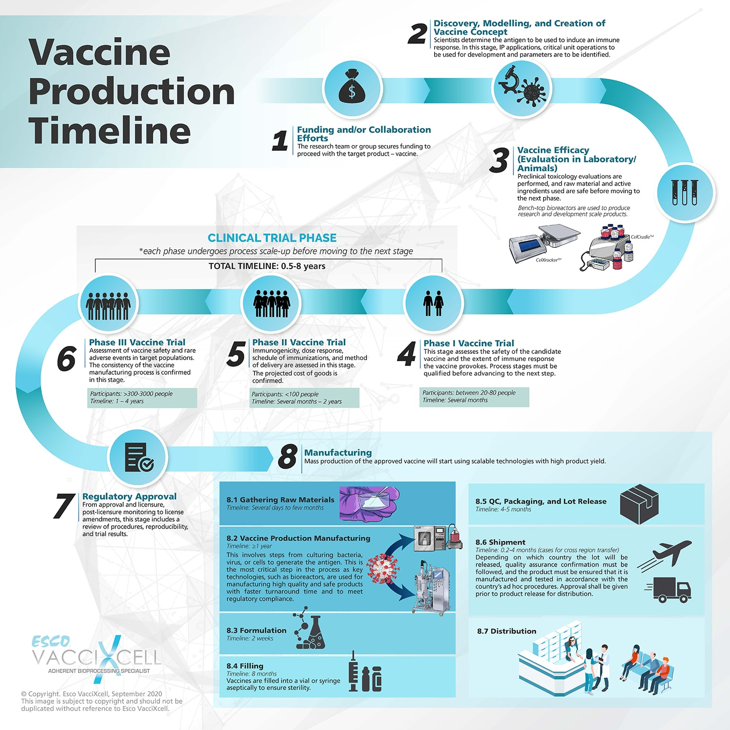 Vaccine productive timeline